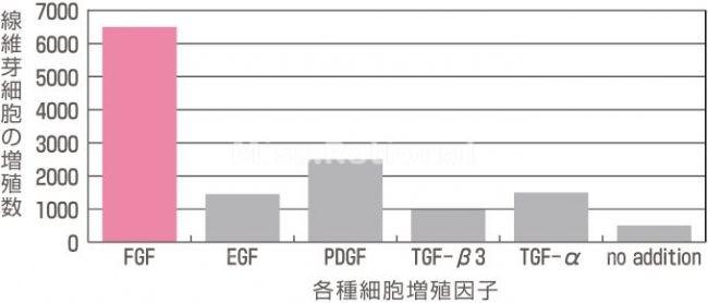 FGF增殖效果